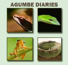 Read all posts in the series &#039;Agumbe Diaries&#039;